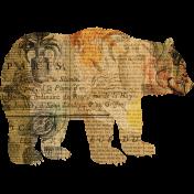 Animal Kingdom- Bear