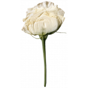 Jane- Elements- White Dried Rose