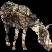 Animal Kingdom- Zoo Collage- Zebra
