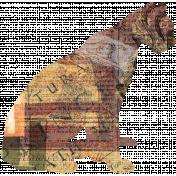 Animal Kingdom- Zoo Collage- Tiger