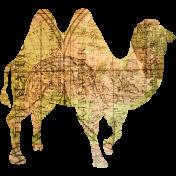 Animal Kingdom- Zoo Collage- Camel