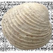 Summer Splash- Elements- White Seashell