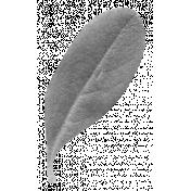 Leaves- Templates- Leaf 7