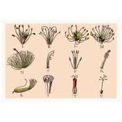 Autumn Day- Elements- Botanical Stamp 3