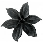 Christmas Day- Elements- Flower 01- Black