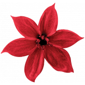 Christmas Day- Elements- Flower 01- Red