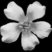 Flowers No.8 Templates- Flower Template 3