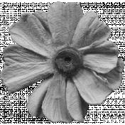 Flowers No.11 - Flower Template 2