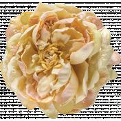 Flowers No.24-02
