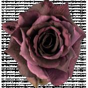 Flowers 24-04