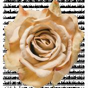 Flowers No.24-03