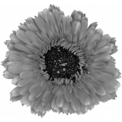 Flowers No.28-01 template
