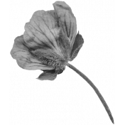 Flowers No.29-12 template