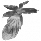 Flowers No.29-13 template