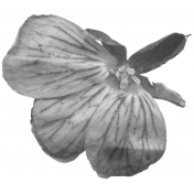 Flowers No.29-14 template