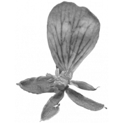 Flowers No.29-17 template