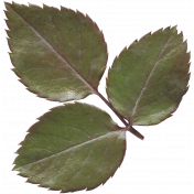 Leaves No.12-11