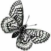 Be Bold Elements- Black And White Butterfly