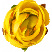 Flowers No. 1- Flower 1