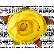 Flowers No. 1- Flower 2