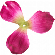 Flowers no 4- Flower 03
