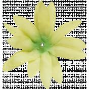 Flowers no 4- Flower 04