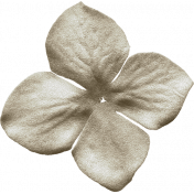 KMRD-201505BTPS-Renewal-flower04