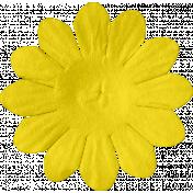 ps_paulinethompson_Bright&Beautiful_flower 3-1