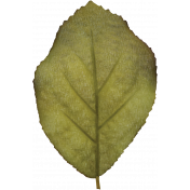 For The Love Of My Girls- Silk Leaf