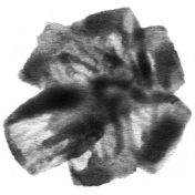 Paint Stamp Template 163