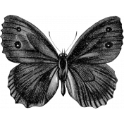 Butterfly Template 031