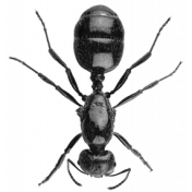 Insect Stamp Template 054