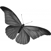 Butterfly Template 032