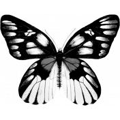 Butterfly Template 034