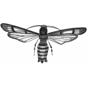 Insect Stamp Template 056