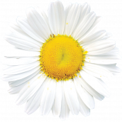 Picnic Day- Daisy