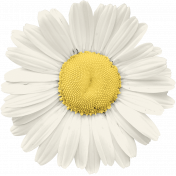 Summer Day - Daisy