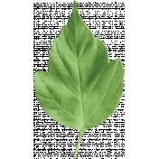 Summer Day- Leaf