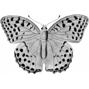 Butterfly Template 035