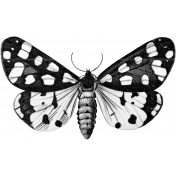 Butterfly Template 036