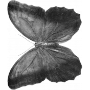 Butterfly Template 037