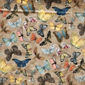 Back To Nature- Brown Butterfly Paper