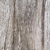 Back To Nature- Bark Texture Paper
