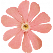 Back To Nature- Pink Flower