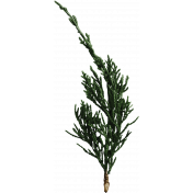 Back To Nature- Pine Sprig