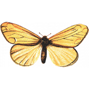 Back To Nature- Yellow Butterfly 3