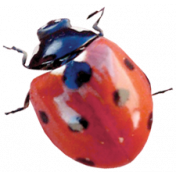 Back To Nature- Ladybug 2