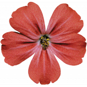 Back To Nature- Red Flower