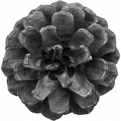 Pinecone Template 006