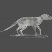 Chills & Thrills Animal Chalk Skeleton Stamp